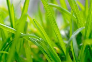 Vandever-Jozef_verhalleman-bouwmachines-tuinmachines-grasmachines-Hooglede-groen-gras